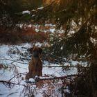 Ridgeback @ winterlight