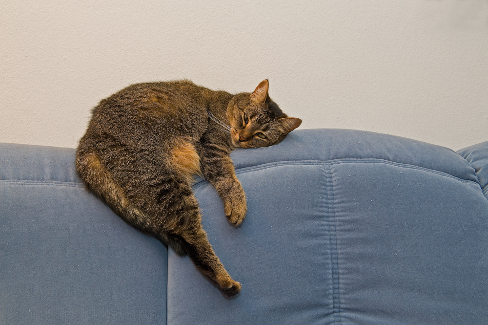 ridin' my sofa