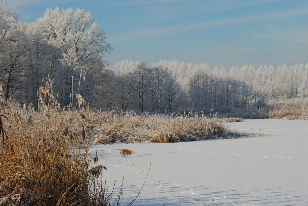 Rieselfelder Münster nach gefrorenem Nebel