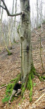 Riesen im Märchenwald