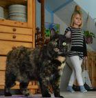 Riesen Katze