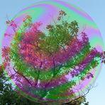 Riesenherbstbaumseifenblase