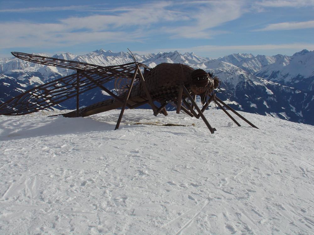 Rieseninsekten in den Alpen!