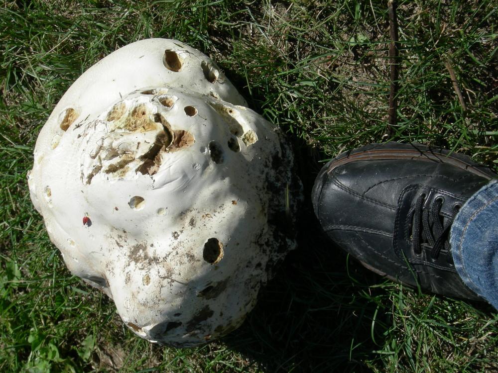Riesenpilz-Bovist