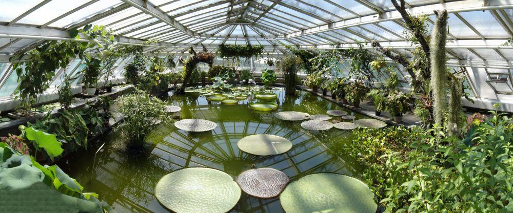 Riesenseerose Victoria im Botanischen Garten Berlin