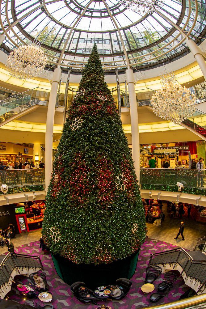 Riesentannenbaum