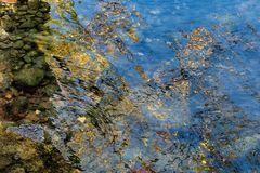 Riflessi nel fiume