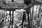 Riflessi nel laghetto, Vigevano, parco Parri