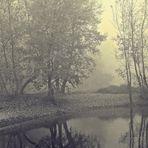 Riflessi nella nebbia