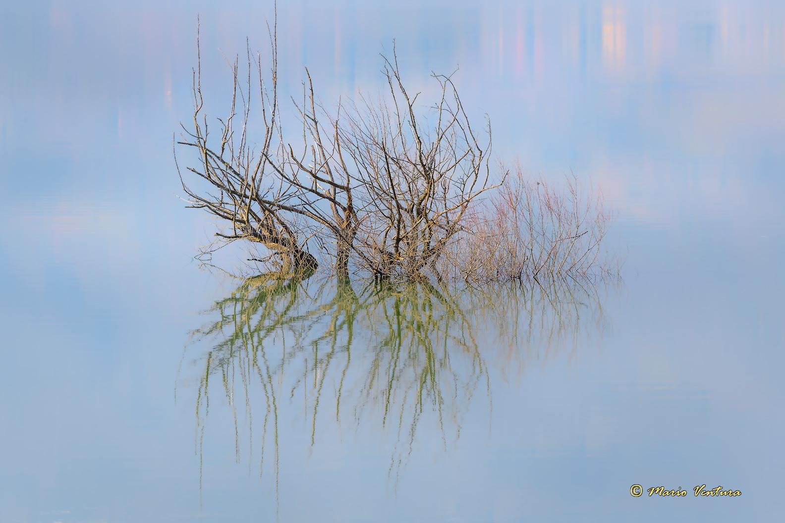 Riflessi sul lago