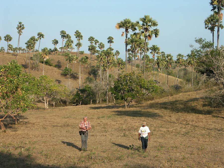 Rinca Wanderung- der Morgennebel ist gegangen