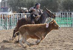 Rinderarbeit auf der Cheval Passion 2012, hier mit Criollos