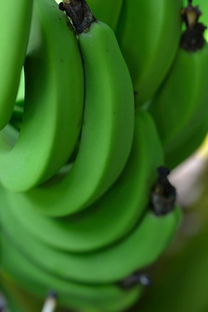 *ring ring ring* Bananaphone