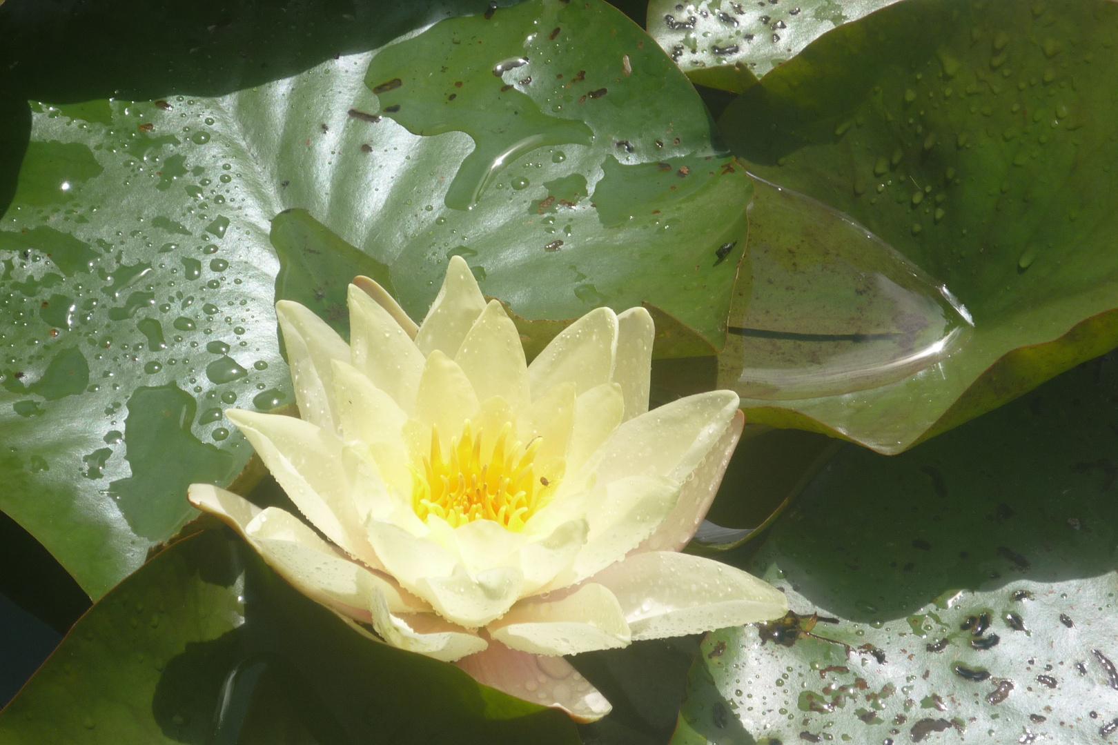 .Ringsherum der Blüten bunter Pracht...