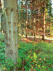 Rinnsal aus Harz