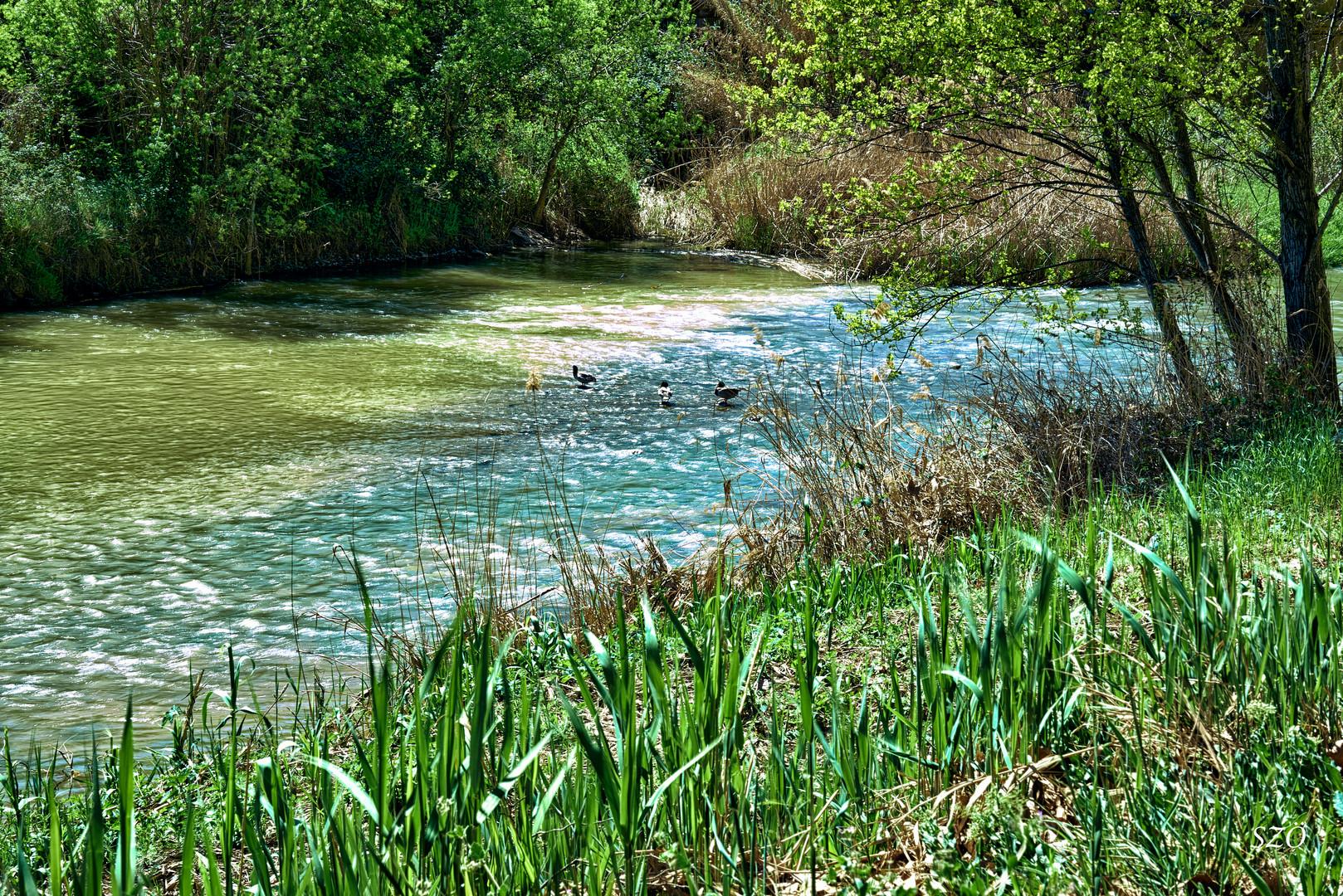 Río con Patos