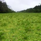 Río en Amazonas. Odnoga Amazonki. A river in Amazonian rain forest.