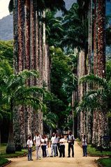 Rio's Botanischer Garten