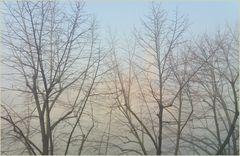 RIsveglio con la nebbia...