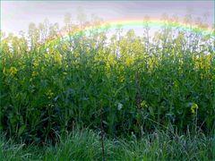 Ritas Regenbogen