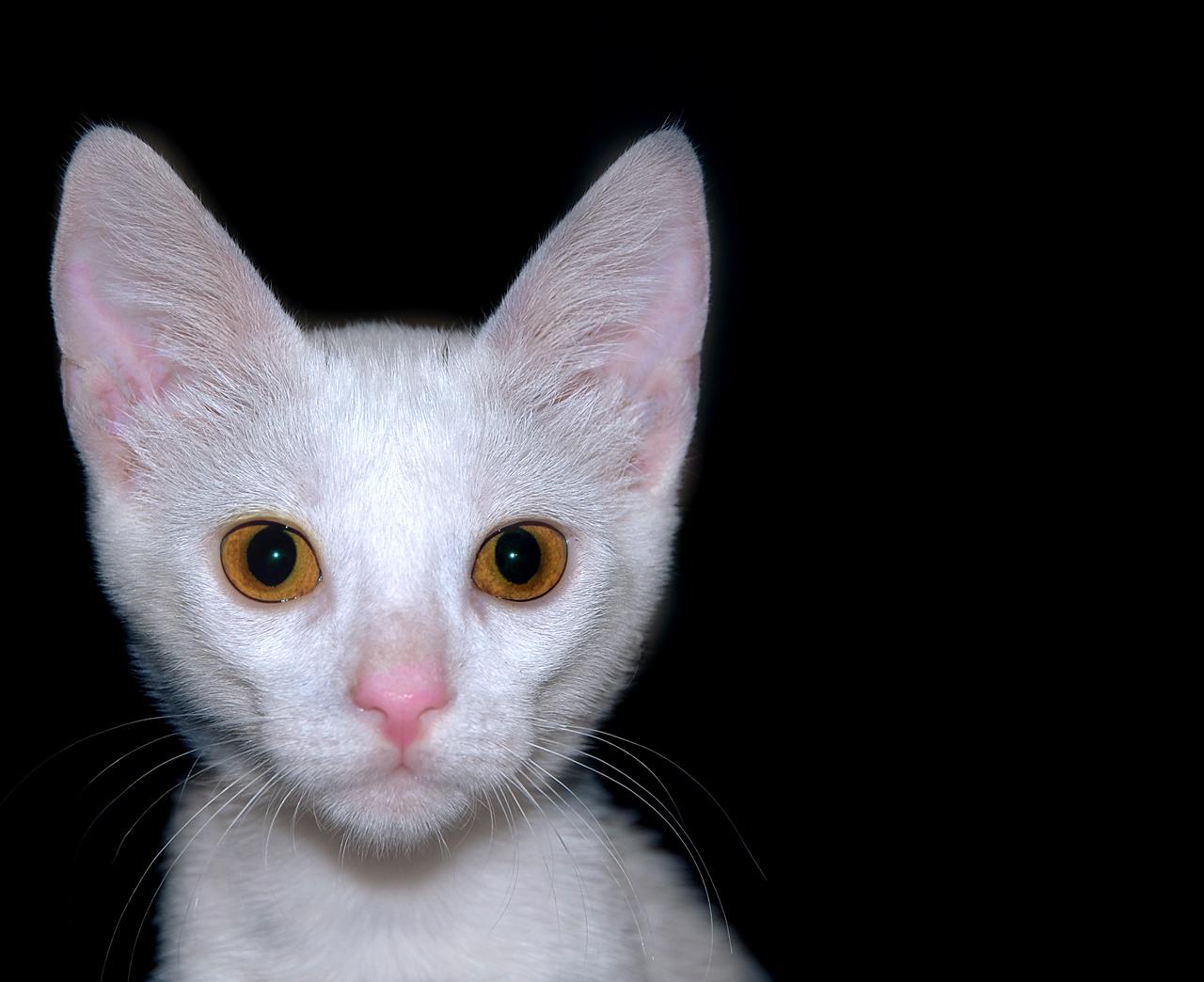 Ritratto di Gigetto il Gatto