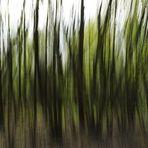 Ritt durch den Wald