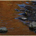River breamish near Ingram 4