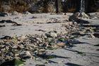 riviere de marée