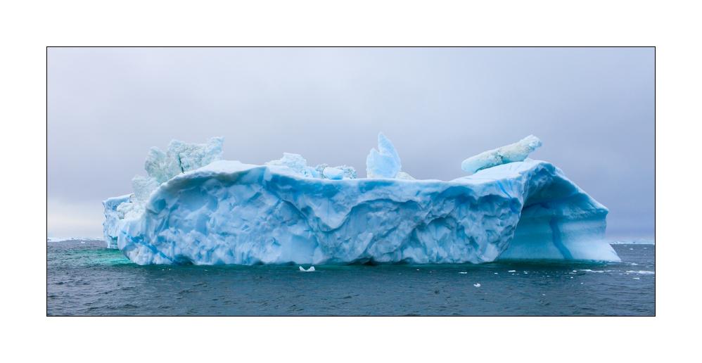 Robbe auf Eisberg ;-))