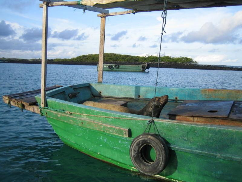 Robbe im Boot, Galapagos Inseln (Juni 2006)