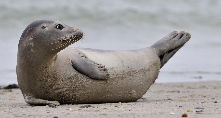 Robben Bilder