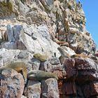 Robben auf den Islas Ballestas im Süden von Peru