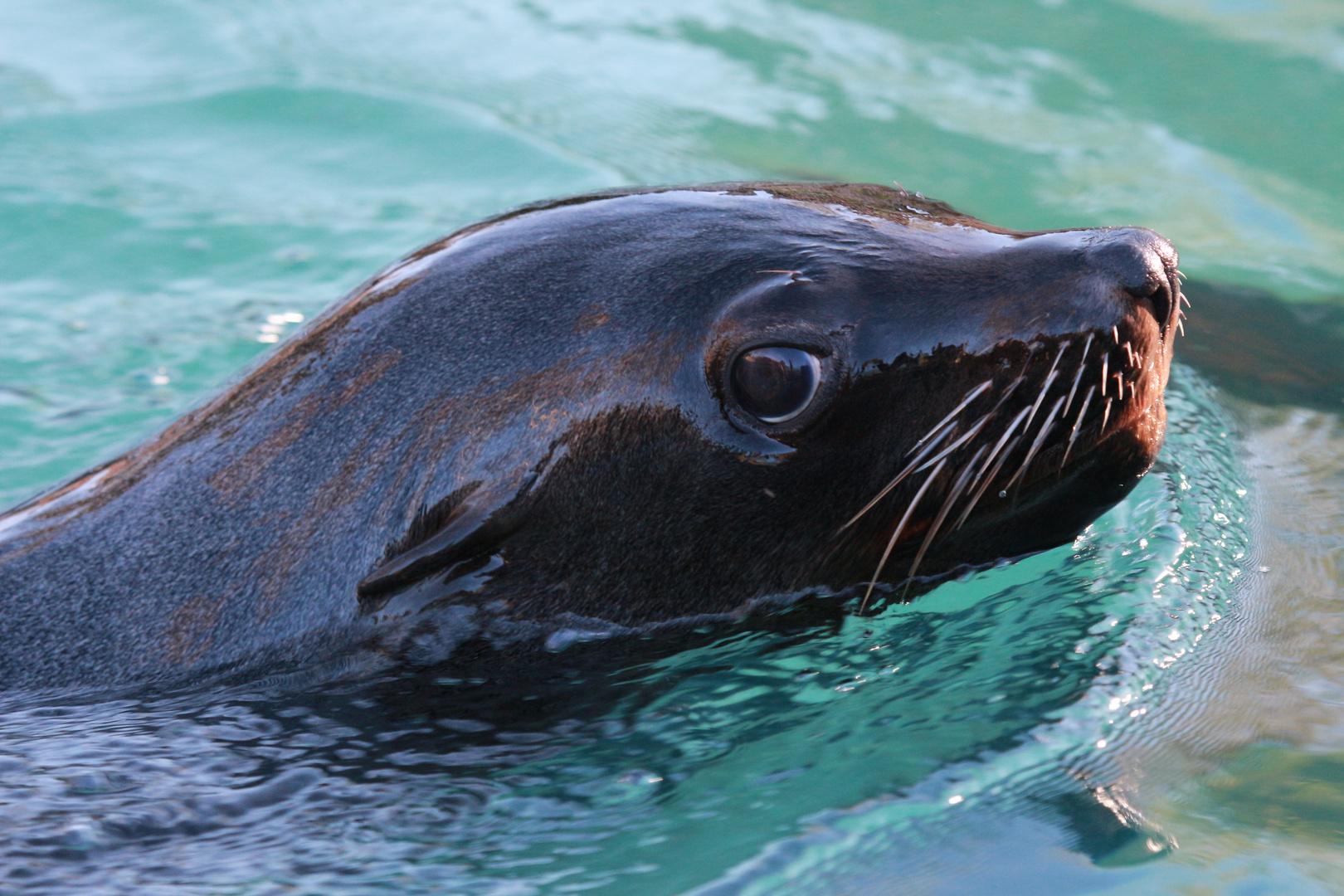 Robben sind bezaubernd