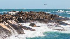 Robbenfelsen