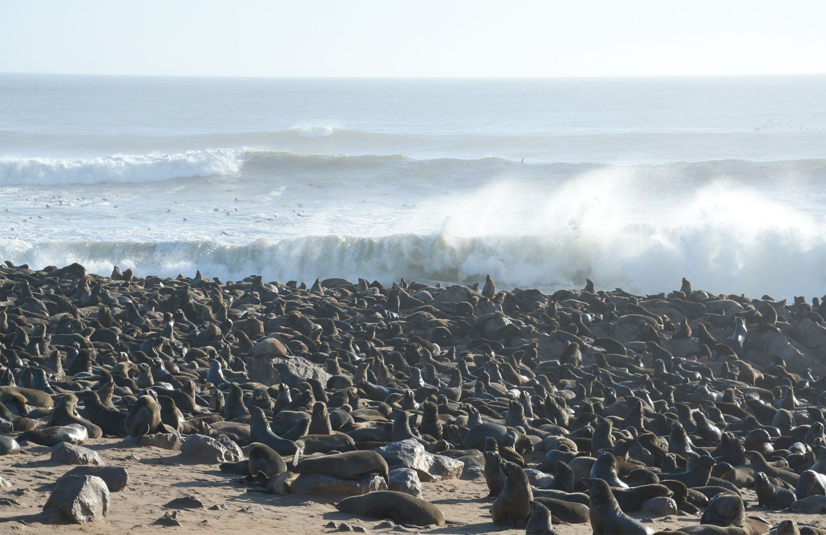 Robbenkolonie a, Cape Cross