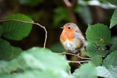 – Robin –