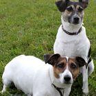 Rocco & Jacky