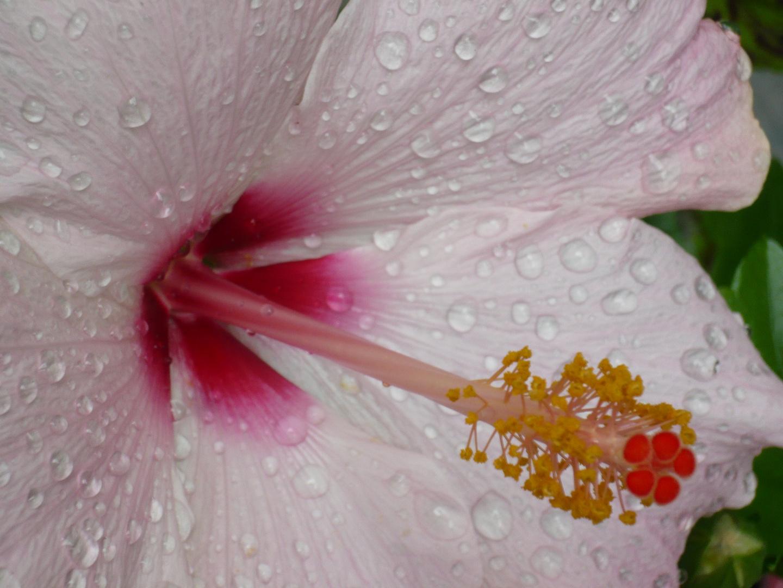 Rocio en tulipan bordado a mano por Dios