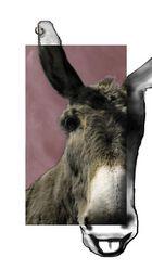 Rock 'n Roll Donkey