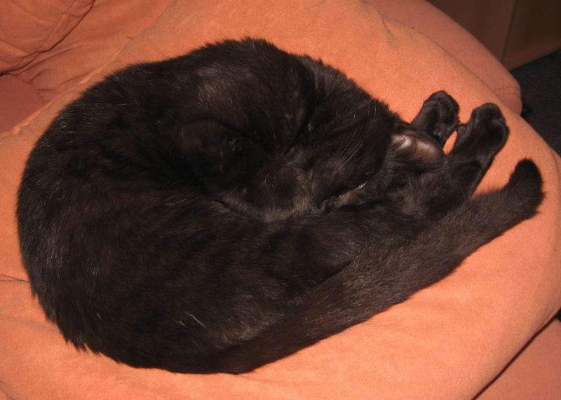 Rocky schläft