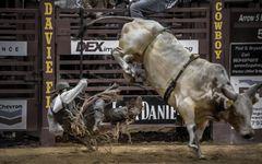 "Rodeo ""Bull riding 2"""