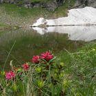 Rododendri si specchiano nel laghetto di montagna