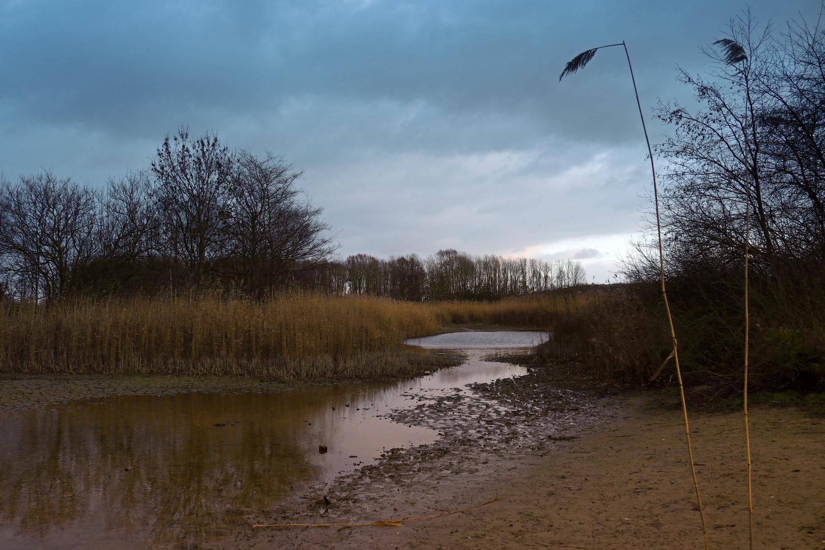 Röhricht am Teich