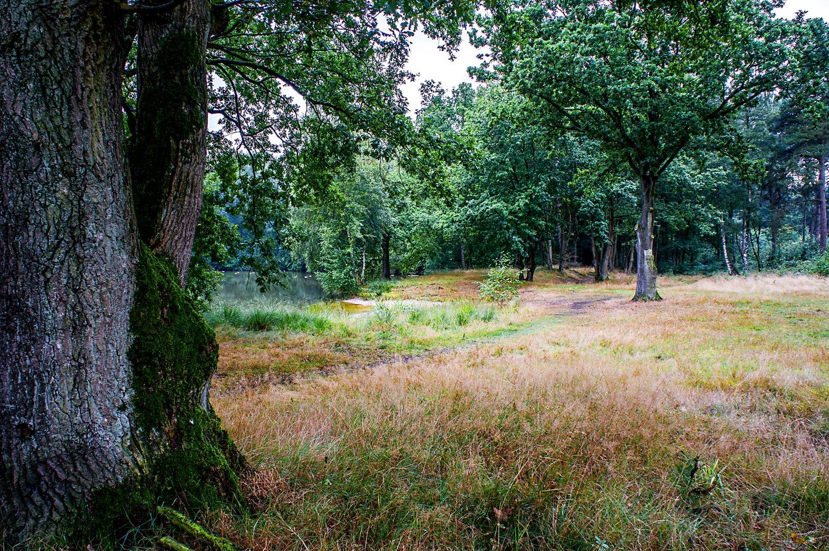 Römersee richtung Heiden von Ramsdorf kommend