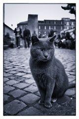 Römische Katze am Largo Argentina