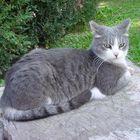 Römische Katze
