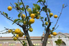 Römische Zitronen