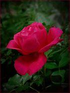 Rojo de pasion