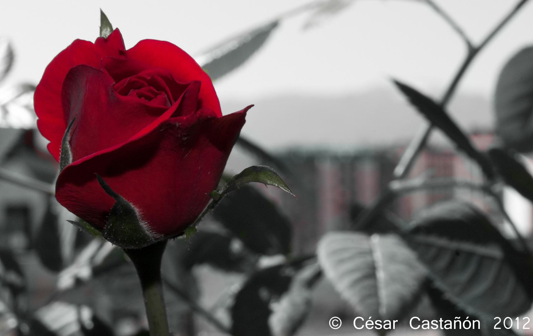 Rojo en un mundo en sin color