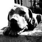 Rolex a wonderful dog